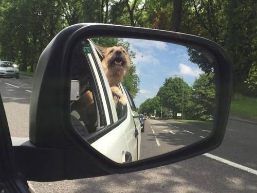 犬も笑うの画像(7枚目)