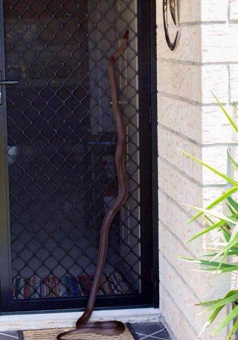 オーストラリアのヘビ事情の画像(15枚目)