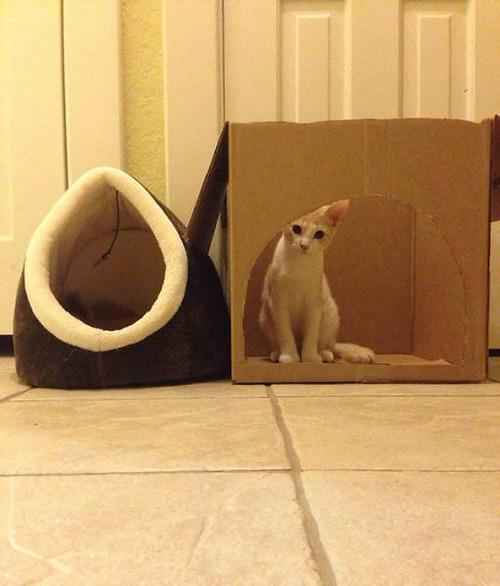 にゃんとも言えない、ちょっと困った猫の画像の数々!!の画像(25枚目)