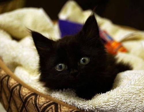 kittens_22