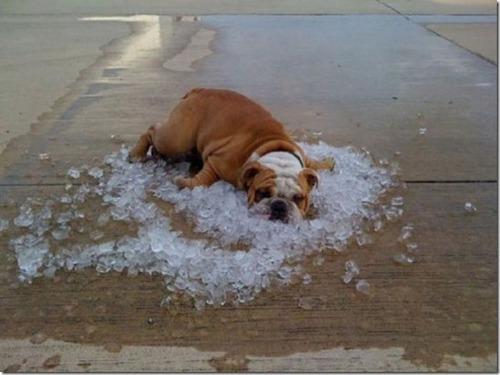 暑すぎるの画像(19枚目)
