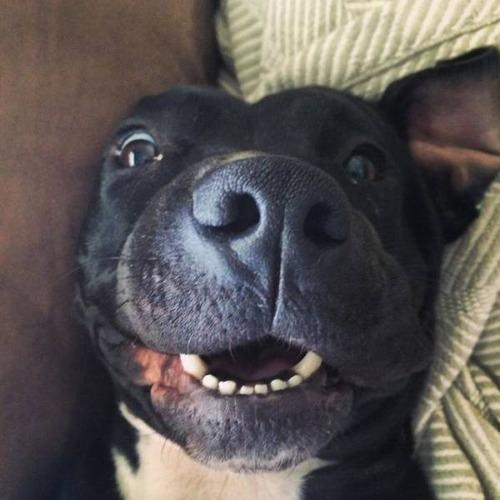 犬も笑うの画像(19枚目)