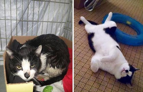 【画像】子汚い野良猫を拾って育てたら、こんなに可愛いニャンコになりましたよ!の画像(8枚目)