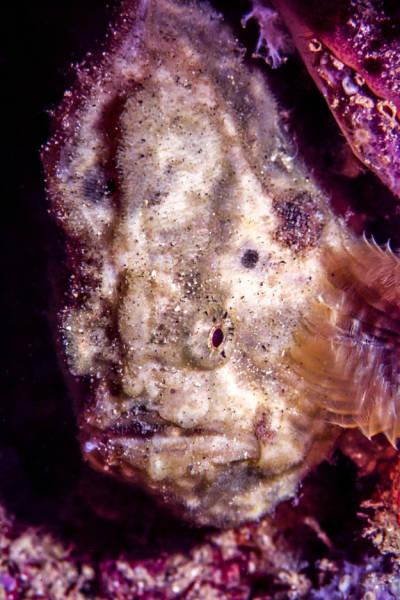 深海の生物の画像(13枚目)