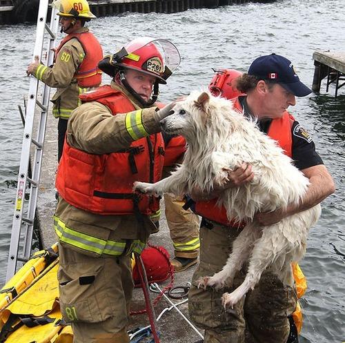 【画像】動物達も本気で助ける!ちょっと癒されるレスキュー隊の仕事の様子!!の画像(24枚目)