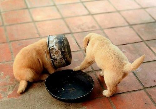 犬はバカ可愛い!!バカだけど憎めない可愛い犬の画像の数々!!の画像(27枚目)