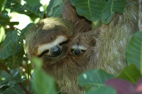 色々な動物の親子の癒される画像の数々!!の画像(8枚目)