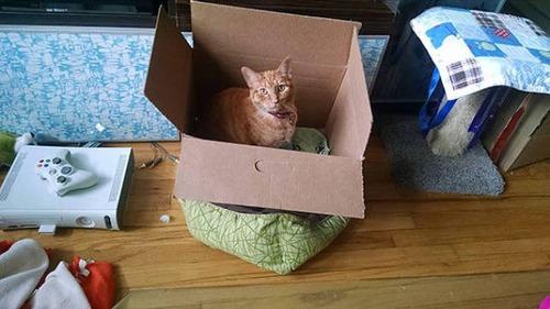 にゃんとも言えない、ちょっと困った猫の画像の数々!!の画像(21枚目)