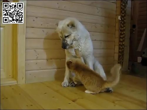 たぶん仲がよい犬と猫ww_000008719