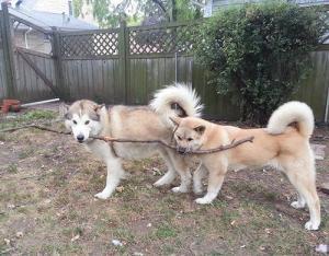 ずっと友達!仲がいい犬たちの画像が癒される!!の画像(6枚目)
