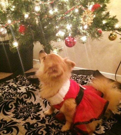 犬とクリスマスの画像(8枚目)