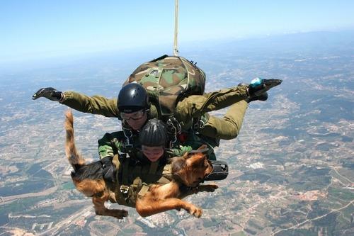 辛くても癒される!軍用犬でほのぼのしている写真の数々!!の画像(4枚目)