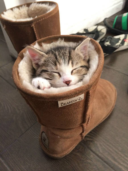 kittens_10