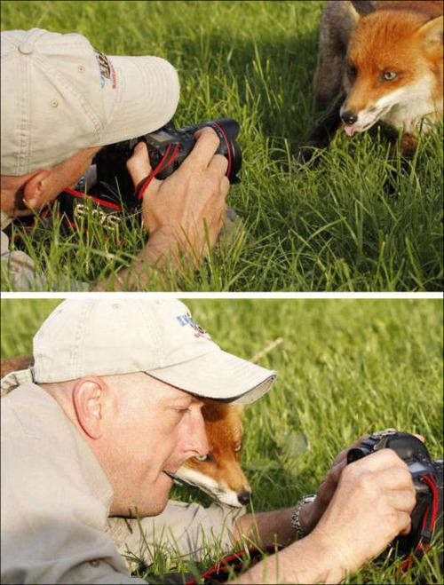 【画像】自然を撮影するカメラマンに興味津々の動物達!!の画像(28枚目)