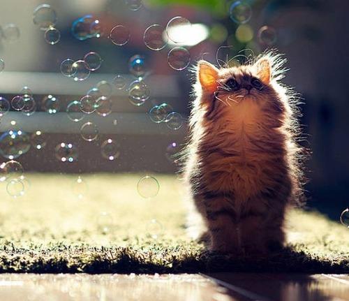 kittens_25