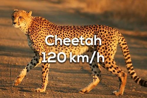 各分野の最速のスピードの画像(6枚目)