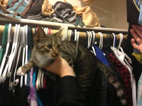 なぜ猫は狭いところが好きなのか??挟まっている猫の画像の数々wwwの画像(15枚目)