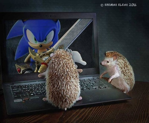 secret_world_of_hedgehogs_10