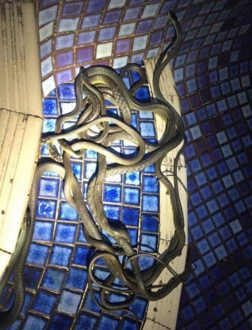 オーストラリアのヘビ事情の画像(19枚目)