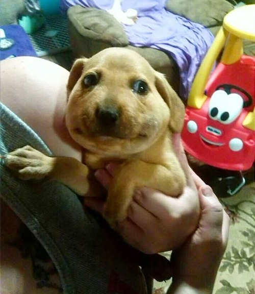 ハチを食べた犬の画像(9枚目)