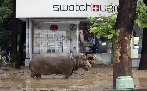 洪水で動物達が大脱走した時の写真の数々wwの画像(15枚目)