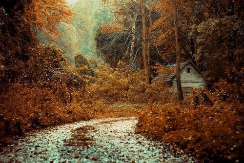 森の中の隠れ家の画像(14枚目)