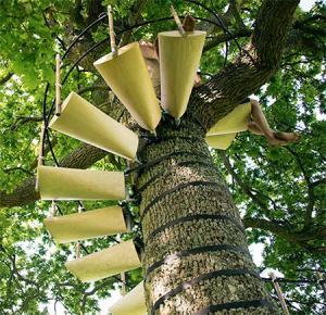 お年寄りでも簡単に木に登れる!木につける階段が面白い!の画像(5枚目)