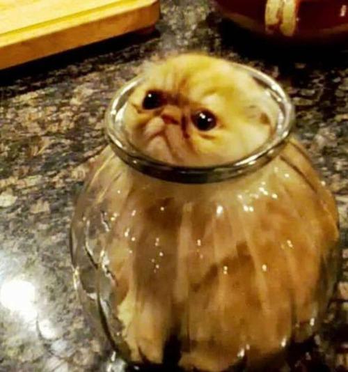 なぜ猫は狭いところが好きなのか??挟まっている猫の画像の数々wwwの画像(9枚目)
