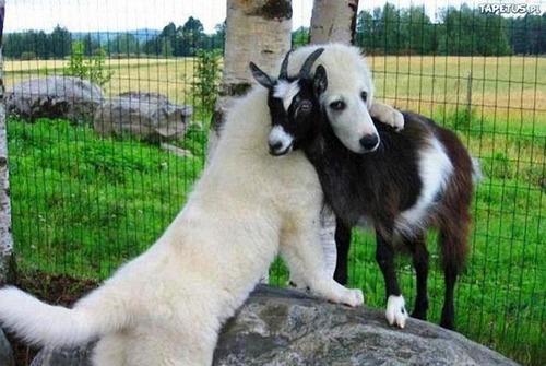 動物たちの驚きの瞬間の画像(7枚目)