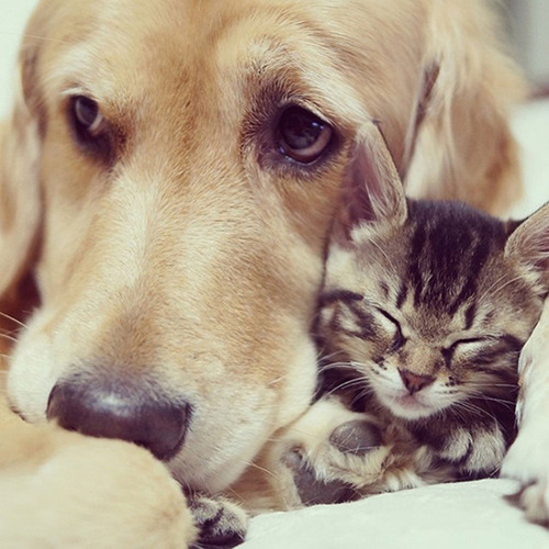 ほのぼのする!仲の良い犬と猫の画像の数々!!の画像(15枚目)
