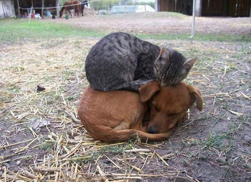 ほのぼのする!仲の良い犬と猫の画像の数々!!の画像(18枚目)