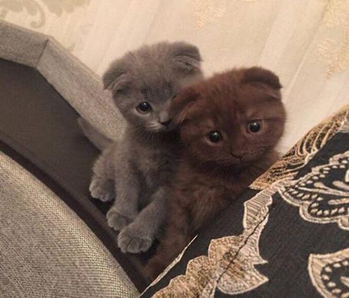 kittens_13