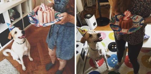 動物達の誕生日の写真の数々!!の画像(5枚目)