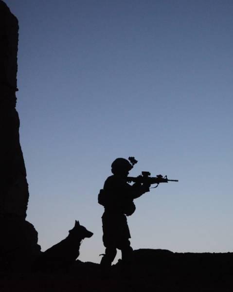 戦地での軍用犬の日常がわかるちょっと癒される画像の数々!!の画像(68枚目)