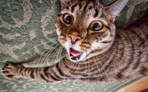 動物達が驚いている瞬間の表情をとらえた写真が凄い!の画像(12枚目)
