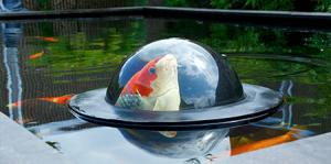 【画像】水面から魚が飛び出して見える「Fish Window」が凄い!!の画像(1枚目)
