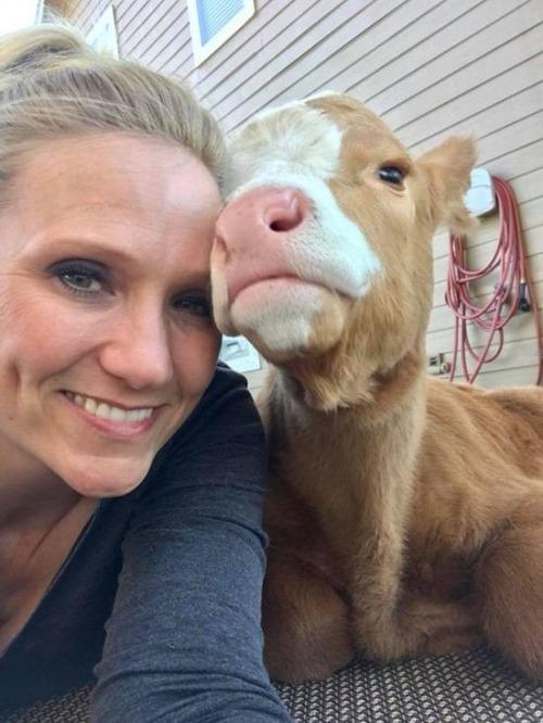 犬と子牛と一緒に生活しているの画像(7枚目)
