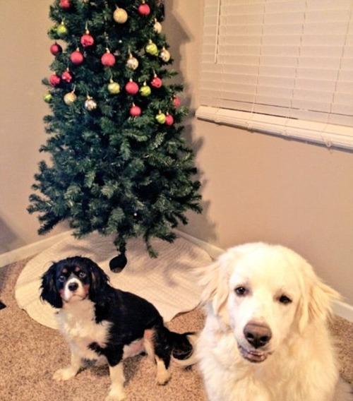 犬とクリスマスの画像(2枚目)