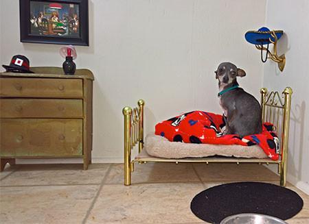 犬小屋の画像(3枚目)