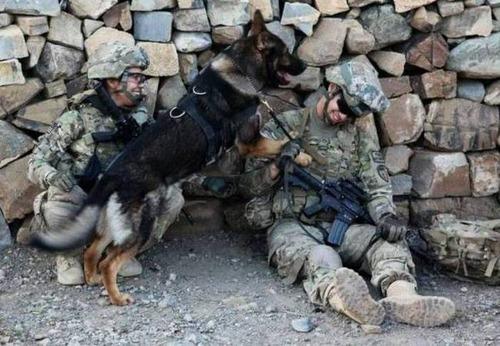 戦地での軍用犬の日常がわかるちょっと癒される画像の数々!!の画像(8枚目)