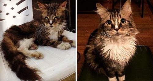 【画像】子汚い野良猫を拾って育てたら、こんなに可愛いニャンコになりましたよ!の画像(10枚目)