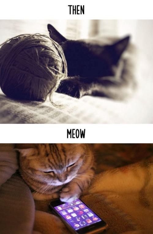テクノロジーの進化がネコ達に与えた影響の比較画像の数々!!の画像(9枚目)