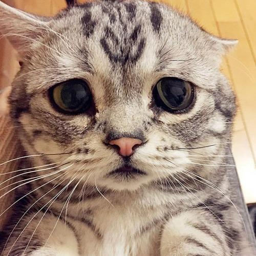 悲しくなってしまう猫の画像(4枚目)