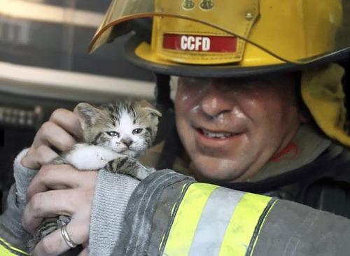 【画像】動物達も本気で助ける!ちょっと癒されるレスキュー隊の仕事の様子!!の画像(16枚目)