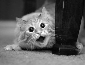 動物達が驚いている瞬間の表情をとらえた写真が凄い!の画像(9枚目)