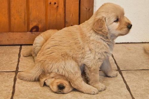 犬は可愛いけど、かなりジャマな感じの犬の画像の数々!!の画像(23枚目)
