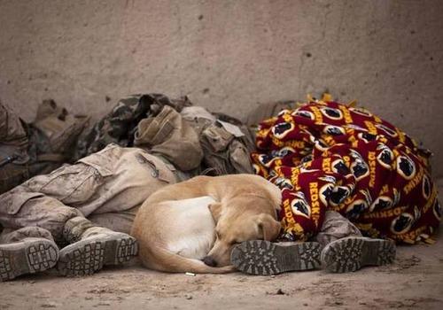 戦地での軍用犬の日常がわかるちょっと癒される画像の数々!!の画像(28枚目)