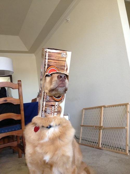 犬はバカ可愛い!!バカだけど憎めない可愛い犬の画像の数々!!の画像(15枚目)