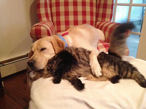 ほのぼのする!仲の良い犬と猫の画像の数々!!の画像(9枚目)