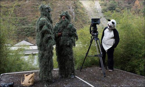 【画像】自然を撮影するカメラマンに興味津々の動物達!!の画像(27枚目)